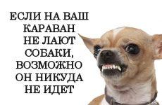 Собаки лают — караван идет