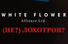 White Flower Alliance Ltd – доверительное управление или развод и кидалово?
