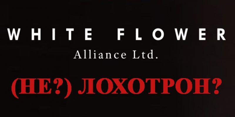 White Flower Alliance Ltd — доверительное управление или развод и кидалово?